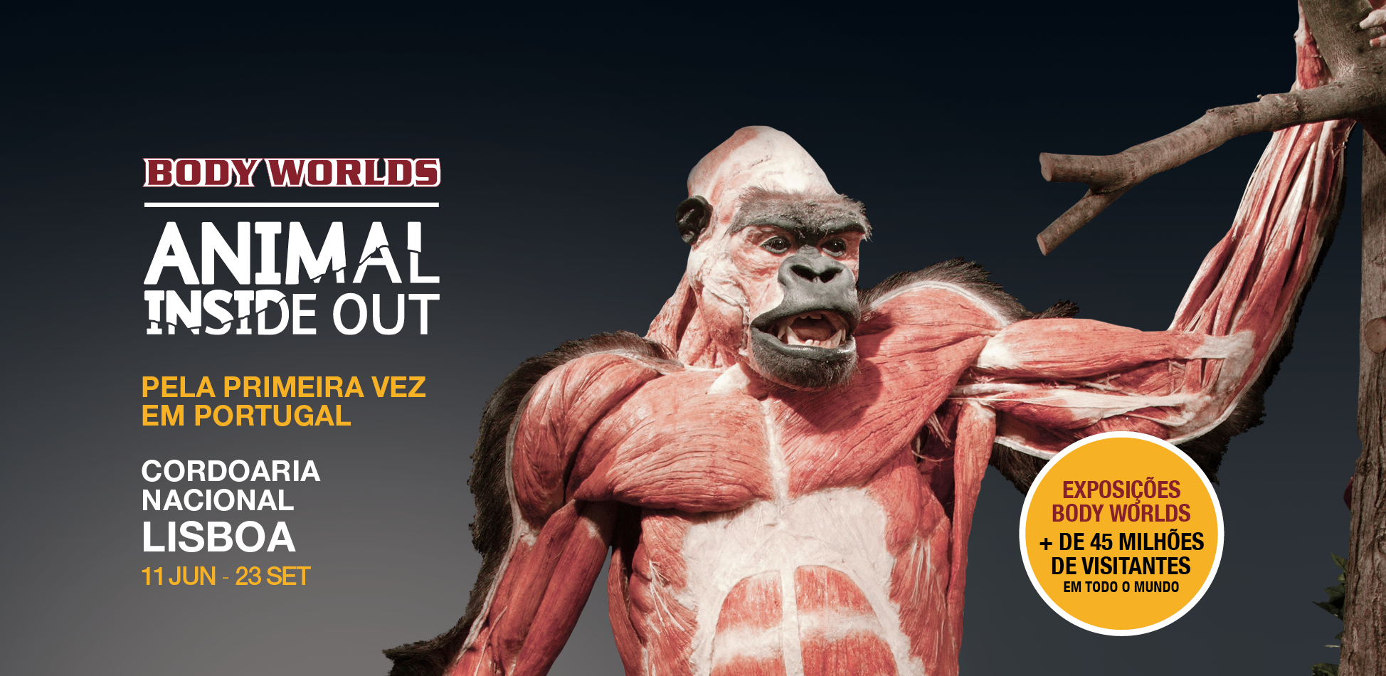 Animal Inside Out In Lisboa Body Worlds Exhibition Of Animals