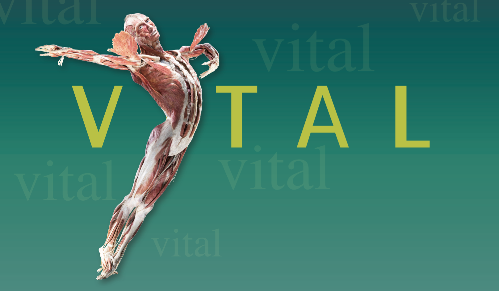 Body Worlds Vital Now In Auckland New Zealand