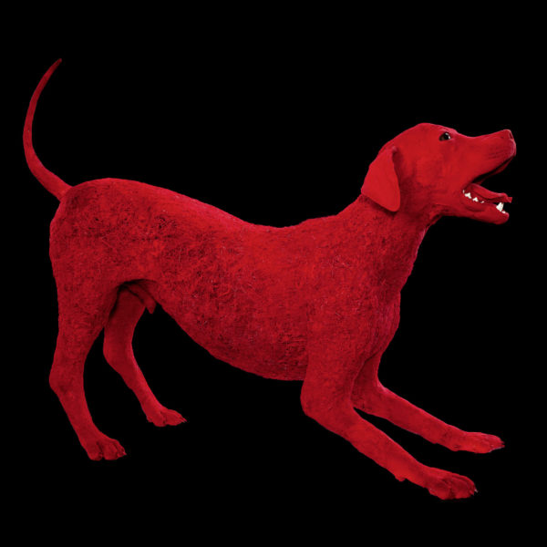 Blood-vessel configuration of a dog
