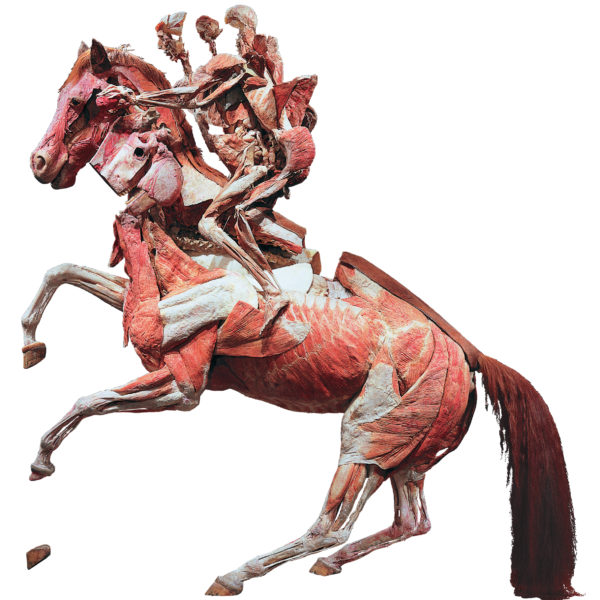 The Rearing Horse with Rider