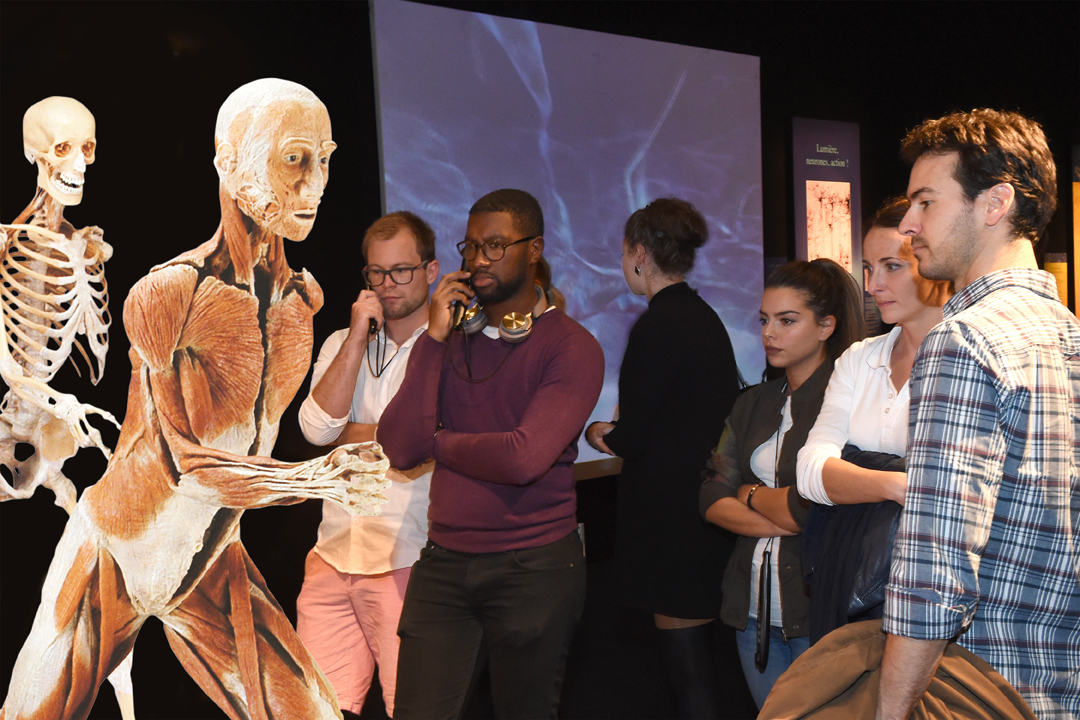 Body Worlds The Museum Experience In The Heart Of London