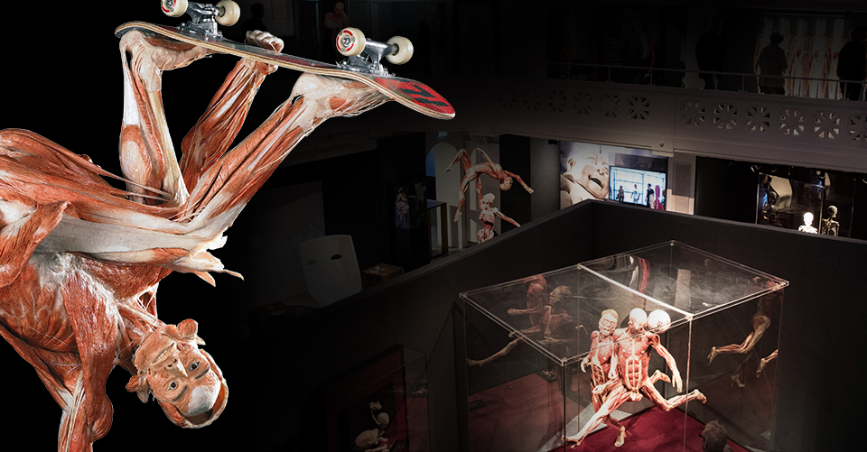 Must-See in Heidelberg: BODY WORLDS museum »Anatomy of Happiness«