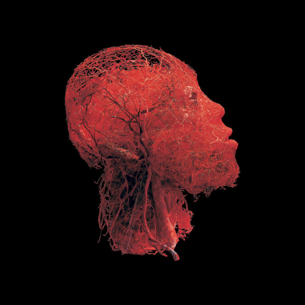 Blood Vessel Configuration of the Head and Brain