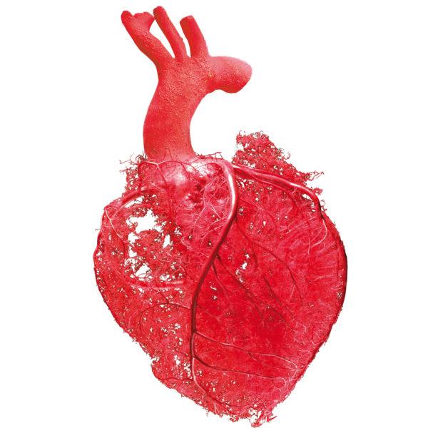 Flux sanguin dans le cœur