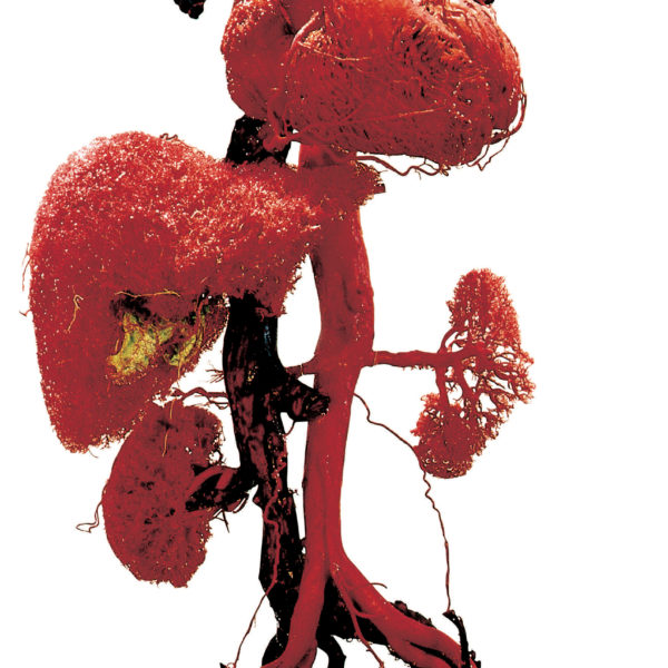 Blood Vessel Configuration