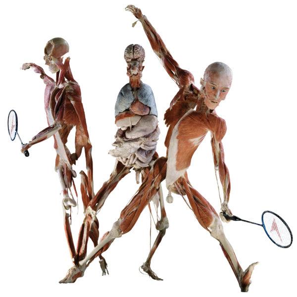 Le joueur de Badminton
