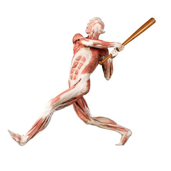 The Baseball Player