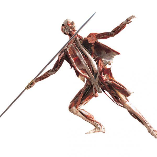 The Javelin Thrower